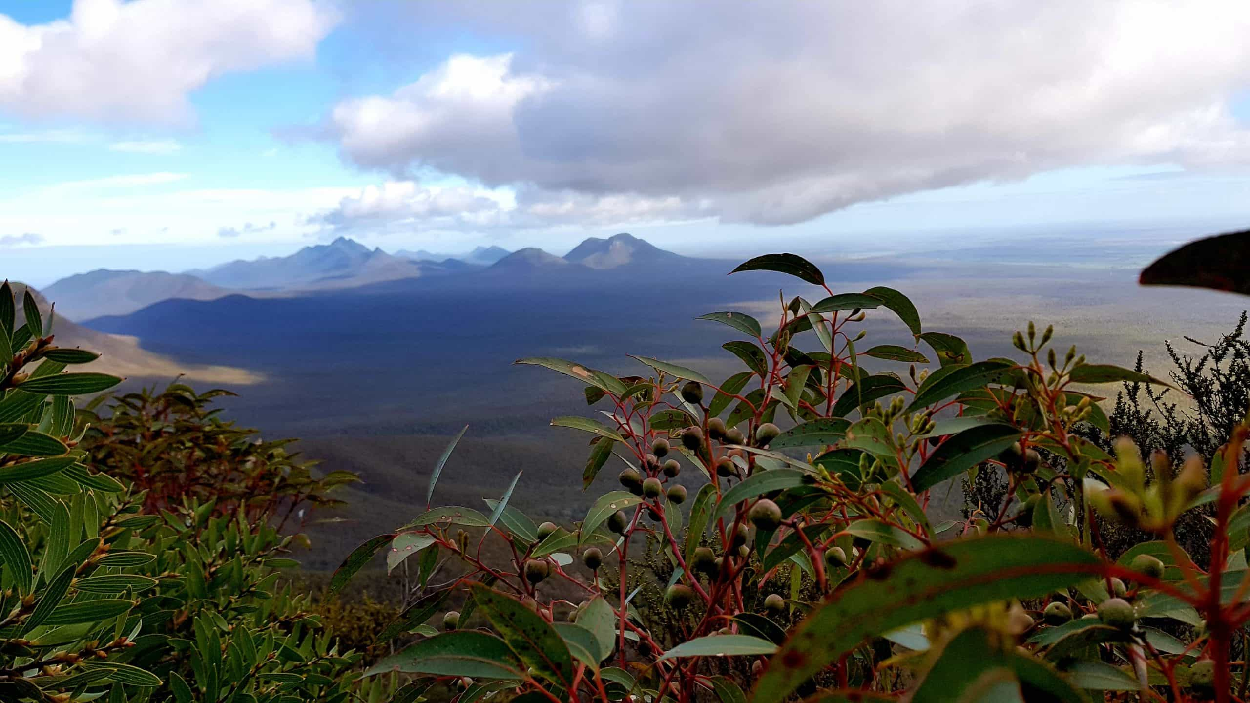A view passed a gumtree branch to the Stirling Ranges under cloud.